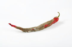 Mouldy chili pepper Stock Photo