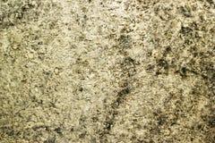 Mouldy стена Стоковая Фотография