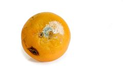 Mouldy fruit. On bright background royalty free stock photography