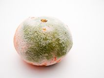 Mouldy orange. A closeup of an orange, almost completely covered in greenish mould Royalty Free Stock Images