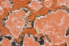 Mouldy Red Brick Texture Stock Images