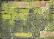 Mouldy Red Brick Wall Stock Images