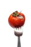 Mouldy Tomato Royalty Free Stock Image
