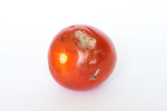 Mouldy Tomato. A mouldy tomato isolated on a white background Royalty Free Stock Photos