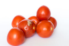 Mouldy Tomato. Moldy tomato with another tomato isolated on white background Royalty Free Stock Photo