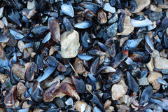 Moule Photographie stock