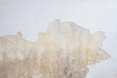 Moule s'élevant sur le mur blanc Photo stock