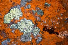 Moule sur la surface en pierre photo stock