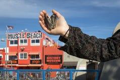 Moules à la plage de muscle Images libres de droits