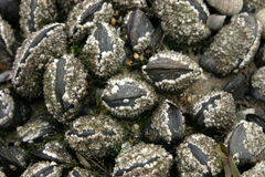 Moules photos stock