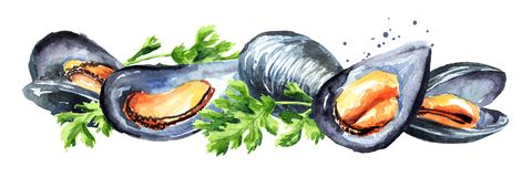 Moules avec des herbes, composition horizontale en fruits de mer, illustration tirée par la main d'aquarelle, d'isolement sur le  illustration de vecteur
