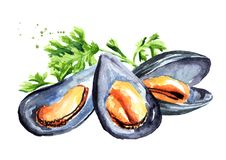 Moules avec l'herbe, fruits de mer Illustration tirée par la main d'aquarelle d'isolement sur le fond blanc illustration stock