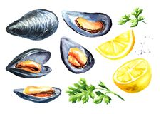 Moules avec le citron et l'herbe, ensemble de fruits de mer Illustration tirée par la main d'aquarelle d'isolement sur le fond bl illustration de vecteur