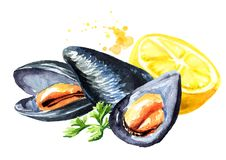 Moules avec le citron et l'herbe, fruits de mer, illustration tirée par la main d'aquarelle, d'isolement sur le fond blanc illustration libre de droits
