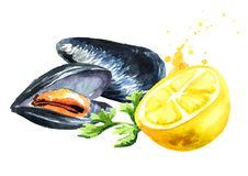 Moules avec le citron et l'herbe, fruits de mer, illustration tirée par la main d'aquarelle d'isolement sur le fond blanc illustration libre de droits
