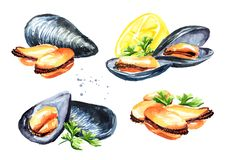 Moules avec le citron et les herbes ensemble, fruits de mer, illustration tirée par la main d'aquarelle, d'isolement sur le fond  illustration stock