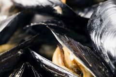 Moules bio pour le restaurant photos libres de droits