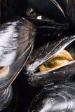 Moules bio pour le restaurant Photo stock