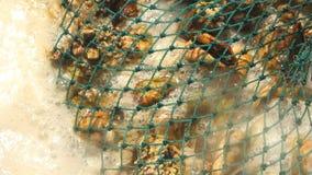 Moules bouillies dans les coquilles dans un filet sur le fourneau photos stock
