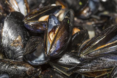 Moules crues Photographie stock