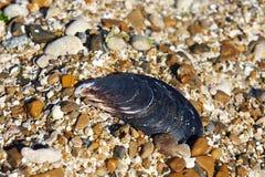 Moules de Shell sur des pierres photo stock