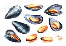 Moules, ensemble de fruits de mer Illustration tirée par la main d'aquarelle d'isolement sur le fond blanc illustration stock