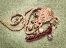 Moules et coquilles d'escargot Photographie stock