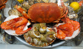 Moules et escargots de crevette de crabe Photos stock