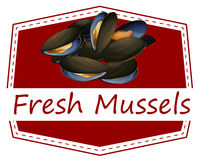 Moules fraîches illustration stock