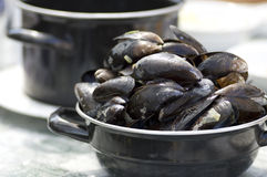 Moules hollandaises Image stock