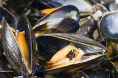 Moules Marinieres Royalty Free Stock Image