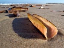 Moules sur une plage Photographie stock libre de droits