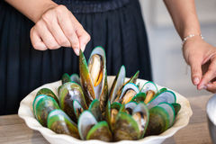 Moules vertes cuites de coquille Images stock