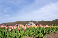 Moulin à vent avec le beau champ de tulipe Image stock