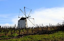 Moulin à vent dans un vignoble avec un ciel bleu Photos libres de droits