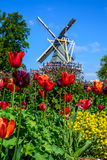 Moulin à vent de la Hollande parmi les tulipes rouges Image libre de droits
