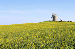 Moulin à vent en Normandie Photos libres de droits