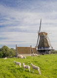 Moulin à vent et moutons sur une digue dans Medemblik Photo stock