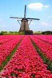 Moulin à vent et tulipes hollandais Images stock
