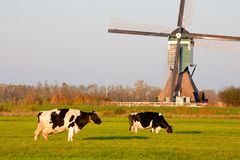 Moulin à vent hollandais traditionnel photos libres de droits