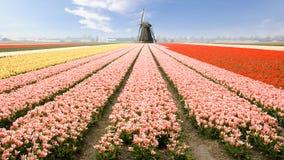 Moulin à vent Hollande image libre de droits