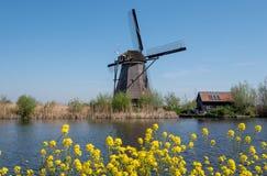 Moulin à vent iconique avec les fleurs jaunes de ressort dans l'avant chez Kinderdijk, Hollande, Pays-Bas, un site de patrimoine  photos libres de droits