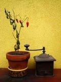 Moulin d'expert et usine sèche de poivron rouge photo stock
