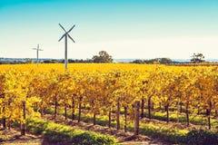 Moulins à vent dans le vignoble de Riverland en automne images stock