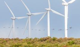 Moulins à vent dans une rangée avec voler d'oiseaux Photographie stock