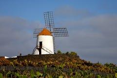 Moulins à vent de cactus   l'Afrique Espagne   et ciel Photo libre de droits
