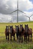 Moulins à vent générateurs de puissance, chevaux Image libre de droits