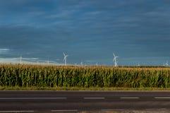 Moulins à vent se tenant sur le champ de maïs Beau paysage rural avec des moulins à vent Image libre de droits
