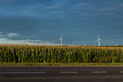 Moulins à vent se tenant sur le champ de maïs Beau paysage rural avec des moulins à vent Images libres de droits