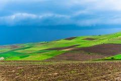Moulins d'adnd de champ de tulipe vieux dans le netherland Photographie stock libre de droits